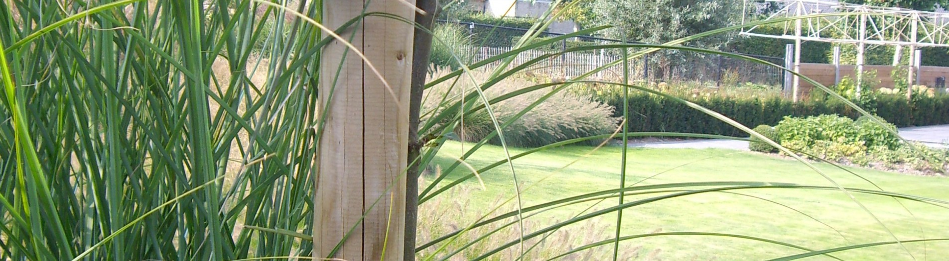 Siergrassen - vijver - golvend gazon
