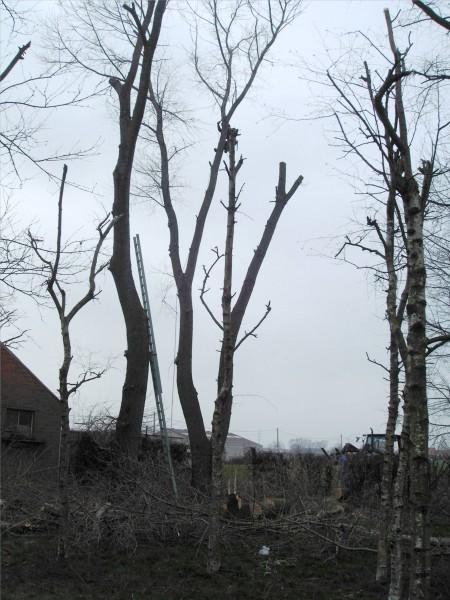 bomen snoeien 00001